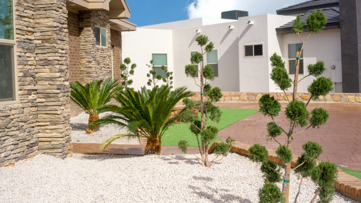 Desert Landscaping Ideas for Transforming Your Yard